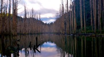 秘境探險:水漾森林!