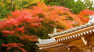 大阪箕面公園楓葉攝影