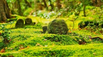 京都大原三千院遊記