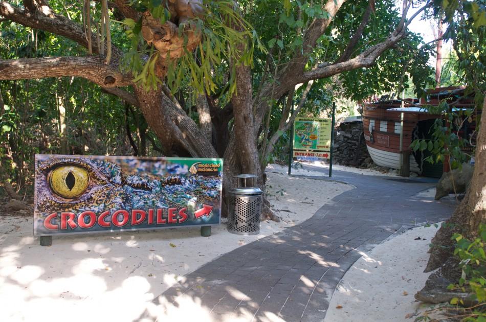 島上有表演鱷魚餵食的地方!