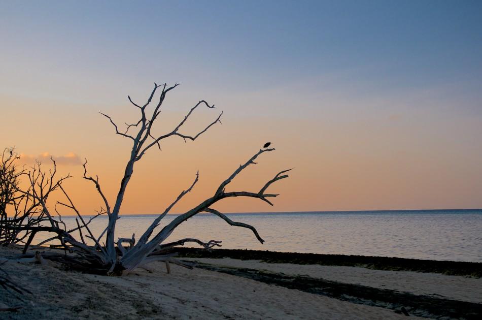 枯木上的海鳥