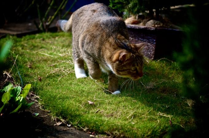 好奇的貓咪總在找一些小玩意兒~