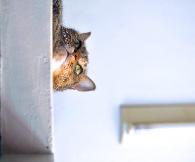 Emily很喜歡爬到高處東張西望~