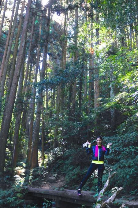 高聳入雲的杉木林!